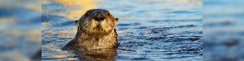 The Otter Side of Morro Bay